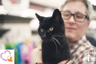 Black cat with white whiskers being held at a pet adoption event