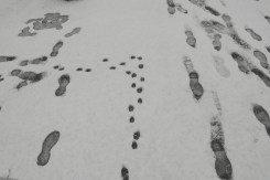 Dog paw prints and footprints in the snow at Kitsilano Beach on a snowy day in Vancouver BC