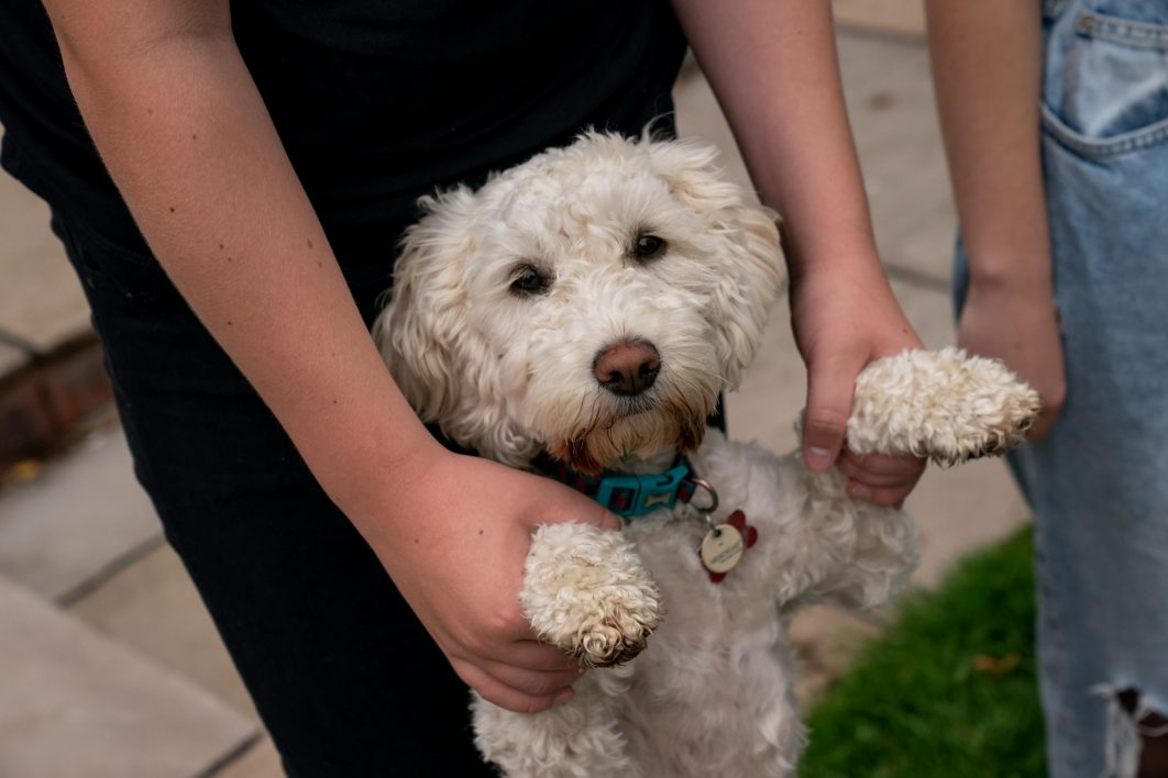 A dog poses for a photograph as his ownder holds his paws.