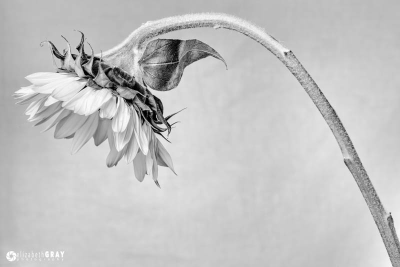 Flower Study – January 2015