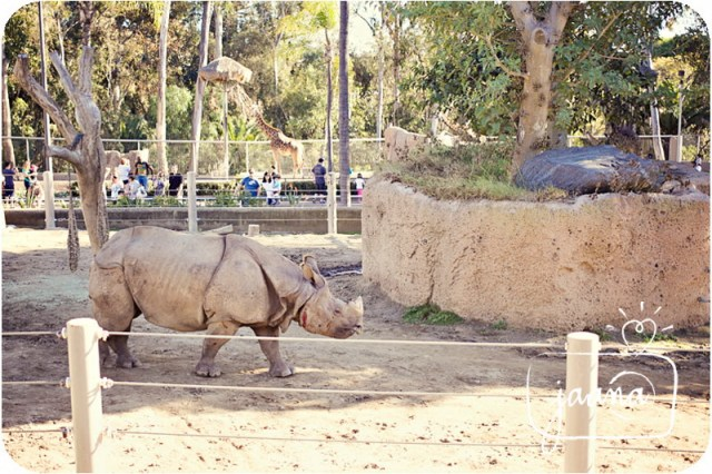 san-deigo-zoo-family-vacation-photographer-06