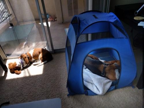 Penny sunbathing