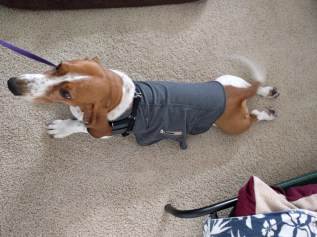 Penny in hand-me-down thundershirt