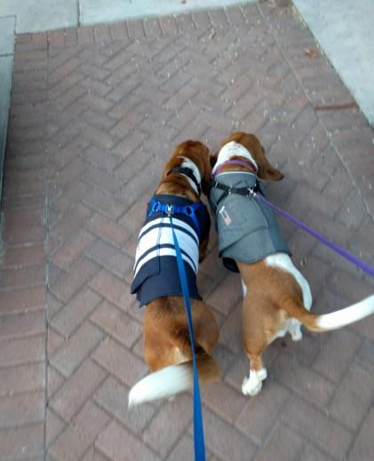 Duke & Penny looking good!