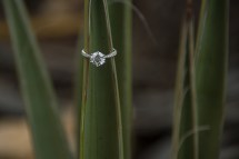 engagement ring on a yucca at Grand Canyon