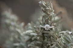 Gorgeous diamond ring in the sage at Grand Canyon