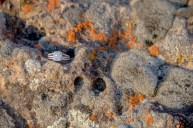 Diamond in lichen