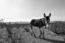 1.8.19 LR Death Valley Trip photography by Terri Attridge-311