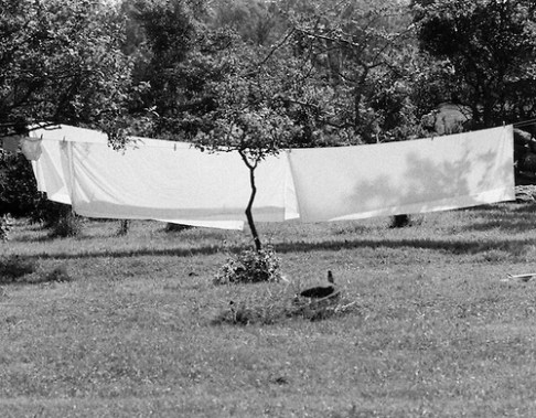 black and white tree in front of sheets hanging to dry