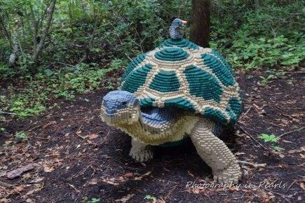 Turtle 23,317