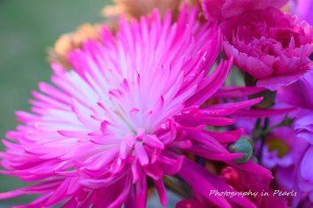 flowers-3