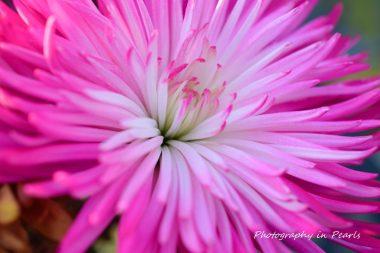 flowers-6-2