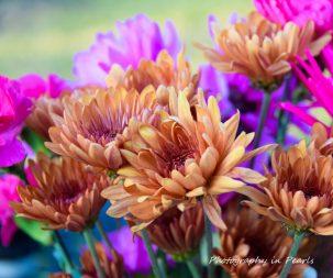 flowers-8-2