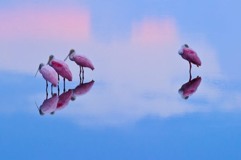 This photo of Roseate Spoonbills at sunrise was captured with the Nikon D3s, a discontinued full-frame DSLR made for sports and wildlife photography.