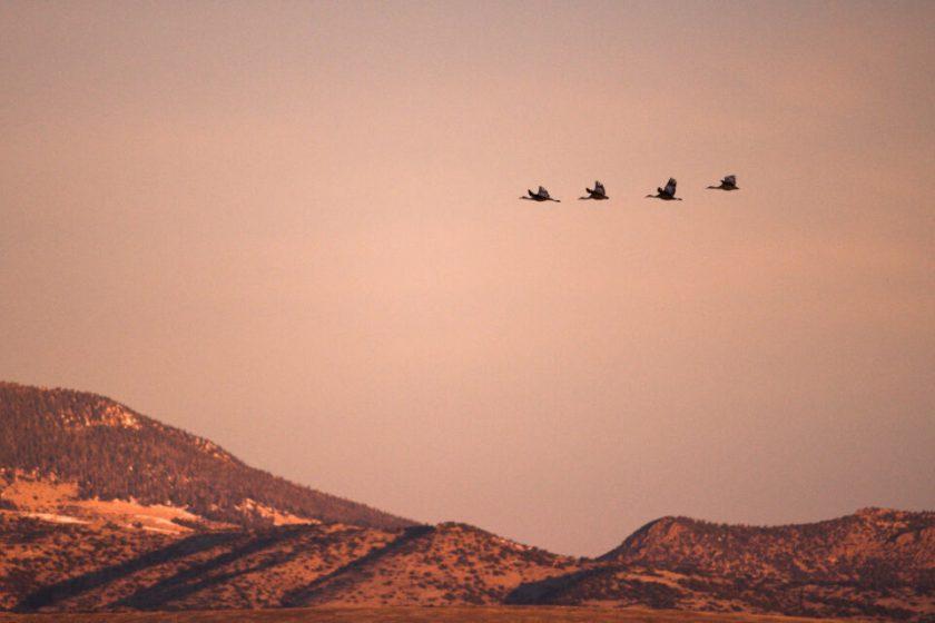 Morning Wildlife Photo D7500