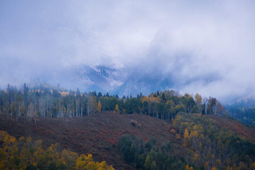 Telephoto Aspens in Fog 2
