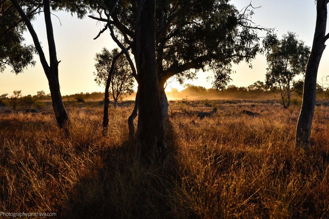 Coolibarh Walk sunset (1 of 1)
