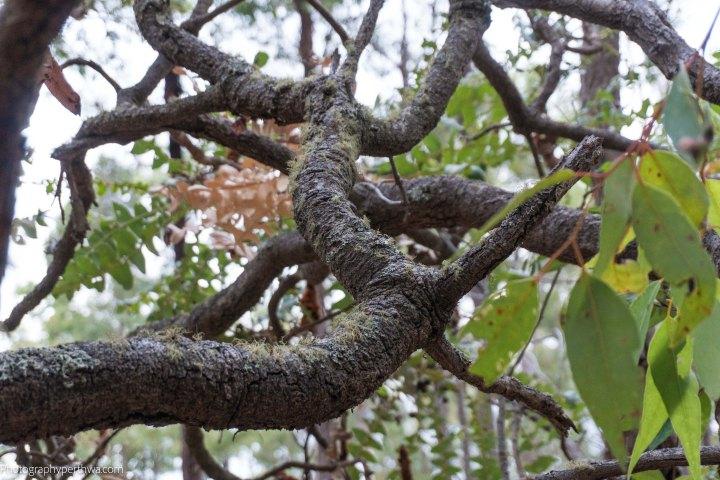 mossy branch (1 of 1)