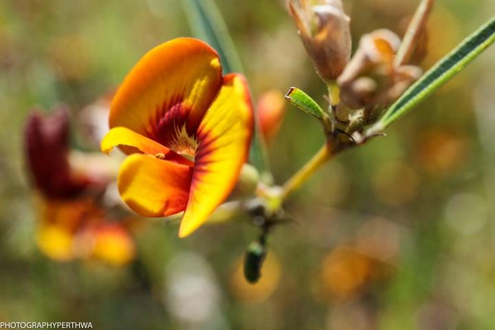 Wireless Hill-flower18 (1 of 1)