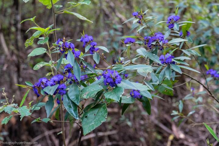 flowers 5 (1 of 1)