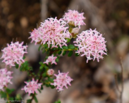 flowers1 (1 of 1)