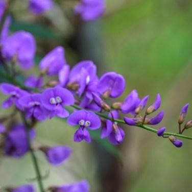 flowers8 (1 of 1)