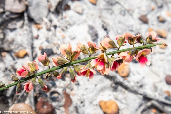 pretty flowers4 (1 of 1).jpg