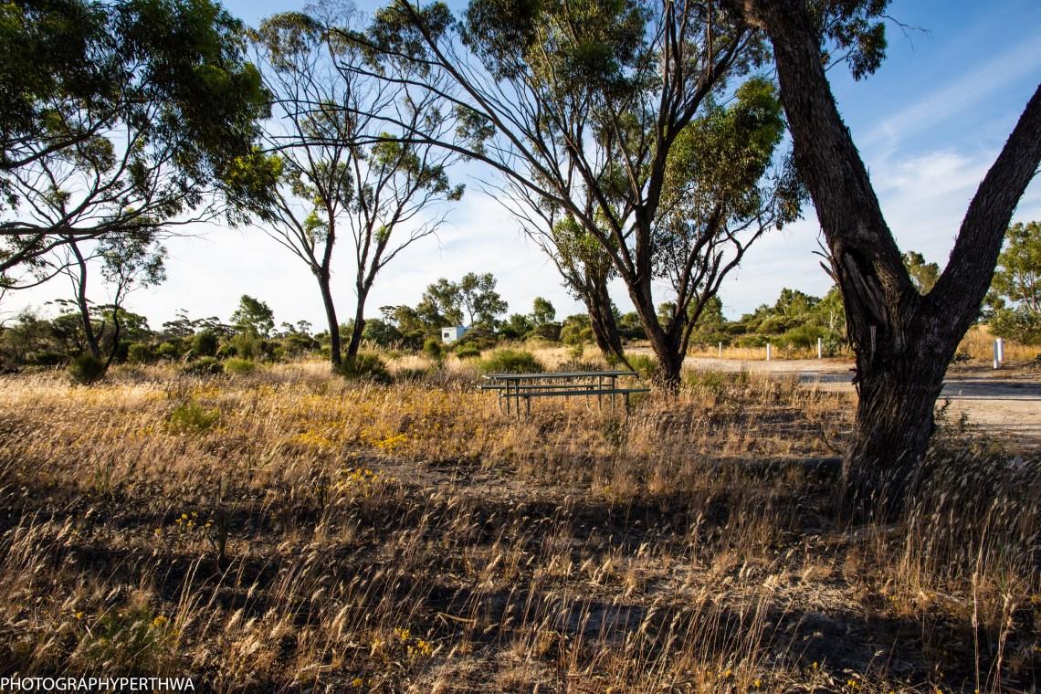 Wongan Hills Arboretum3 (1 of 1)