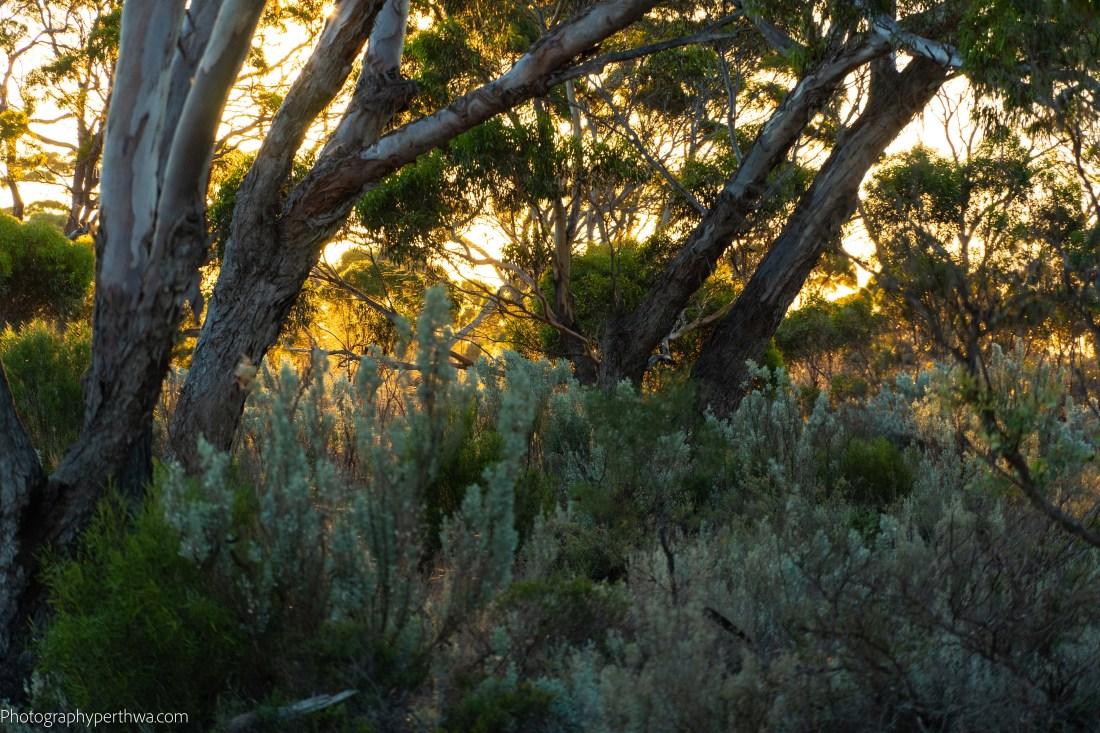 sunset through trees (1 of 1).jpg