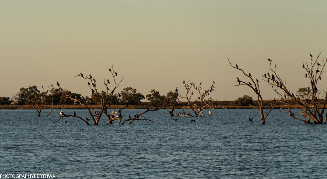 pelican perch best (1 of 1).jpg