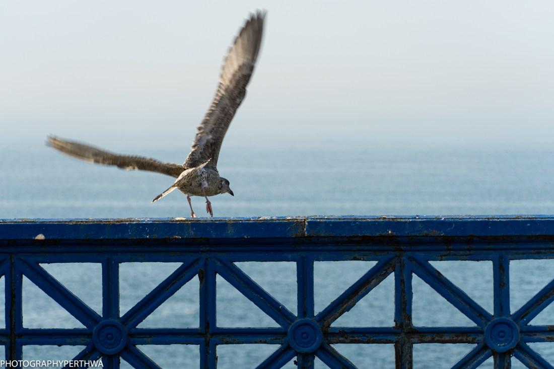 take off (1 of 1).jpg