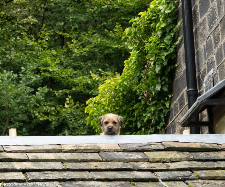 cautious dog on roof (1 of 1).jpg