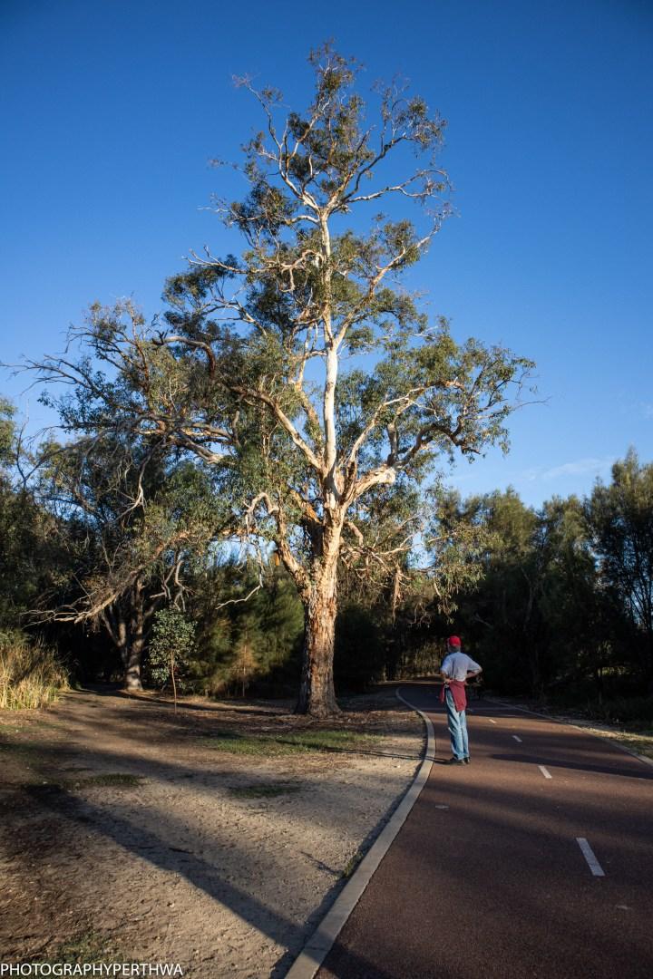 Stephenand tree (1 of 1).jpg