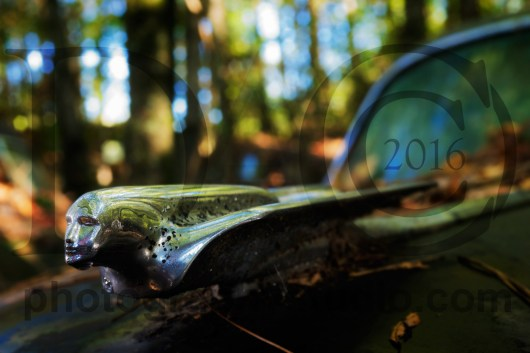20151017_2386-cadillac-hood-ornament-1