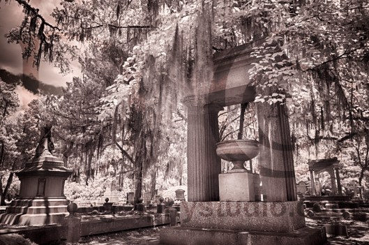 Savannah_4455-4457_HDR