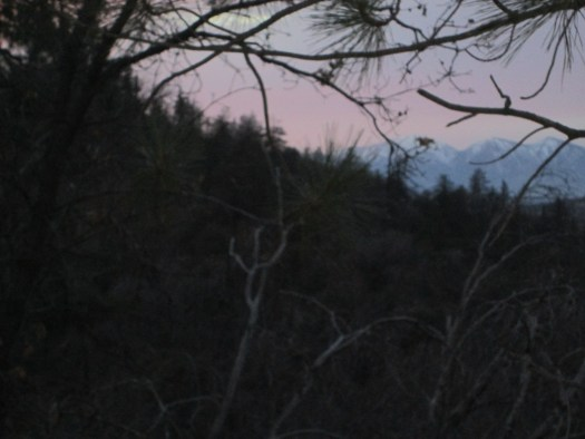 The view of Mount Baldy can be viewed through the pine trees.