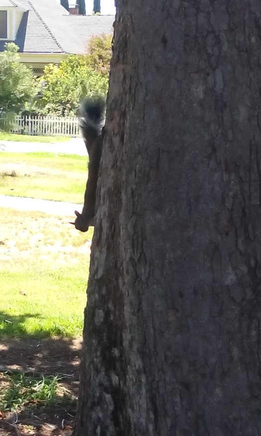 The Squirrel Looked At Me