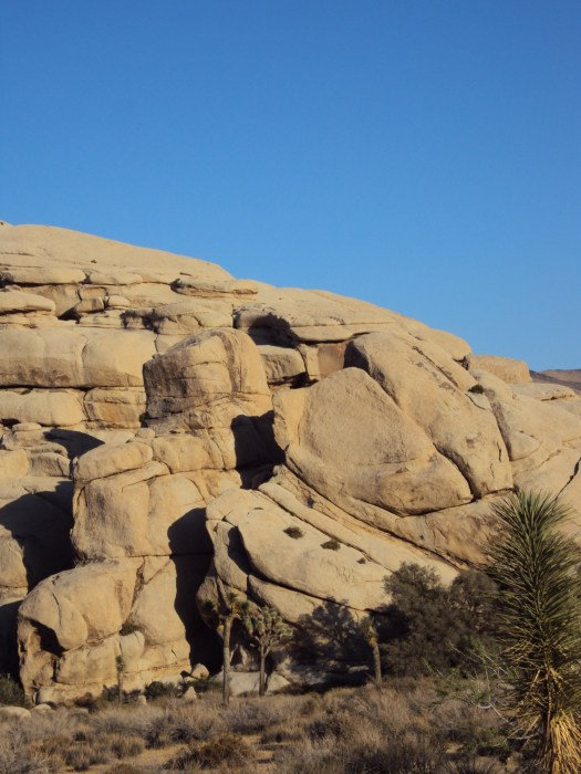 The Joshua trees grow all around the boulder formations.
