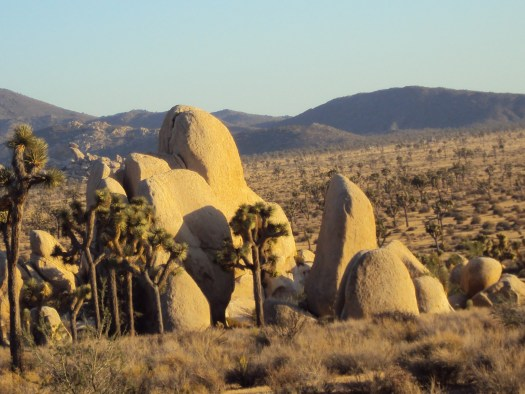 Erect rocks and Joshua trees.