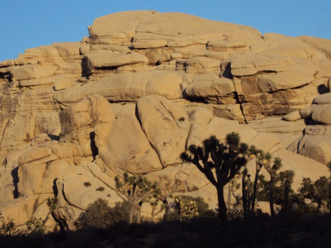 A Joshua tree silhouetted against the boulder formation.