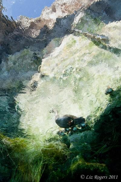 Ducks in Kilsby's Sinkhole