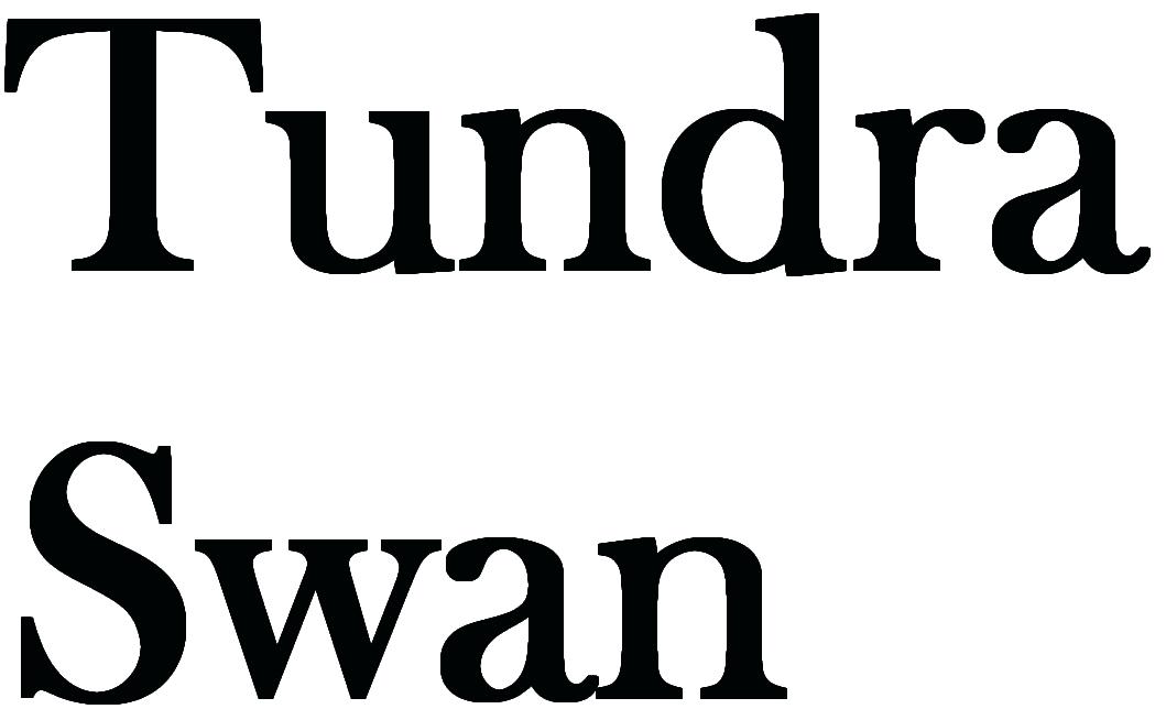 AURORA BOREALIS & TUNDRA SWANS: Under the Northern Lights