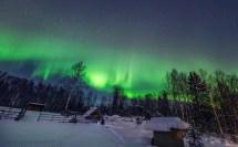 Aurora Borealis & Tundra Swans Under Northern Lights