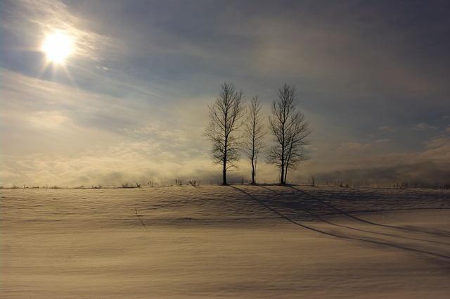 冬の陽を浴びて… by ぽいた (ID:99049) - 寫真共有サイト:PHOTOHITO
