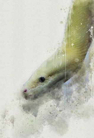 Animals_мир животных в акварельной фототехнике