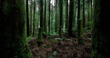 Green woods Patchwork (Azores, São Miguel 2011)