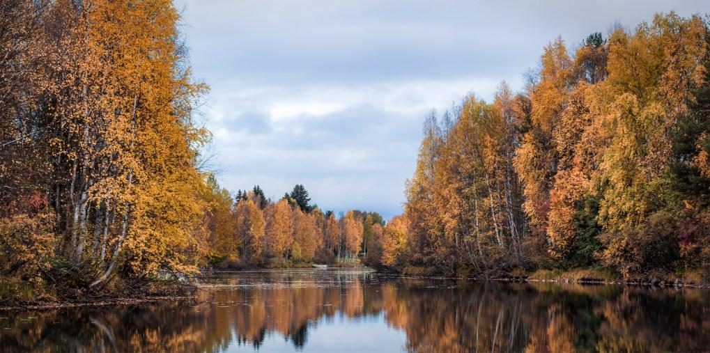 Autumn Colors (Rovaniemi 203)