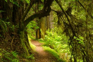 11. A Hike along the Mill Creek Trail in Jedediah Smith State Park, California