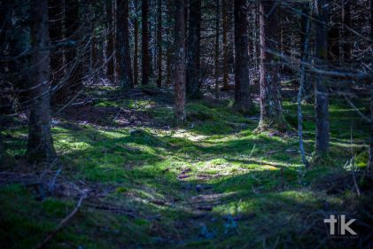 Bohemian Forest