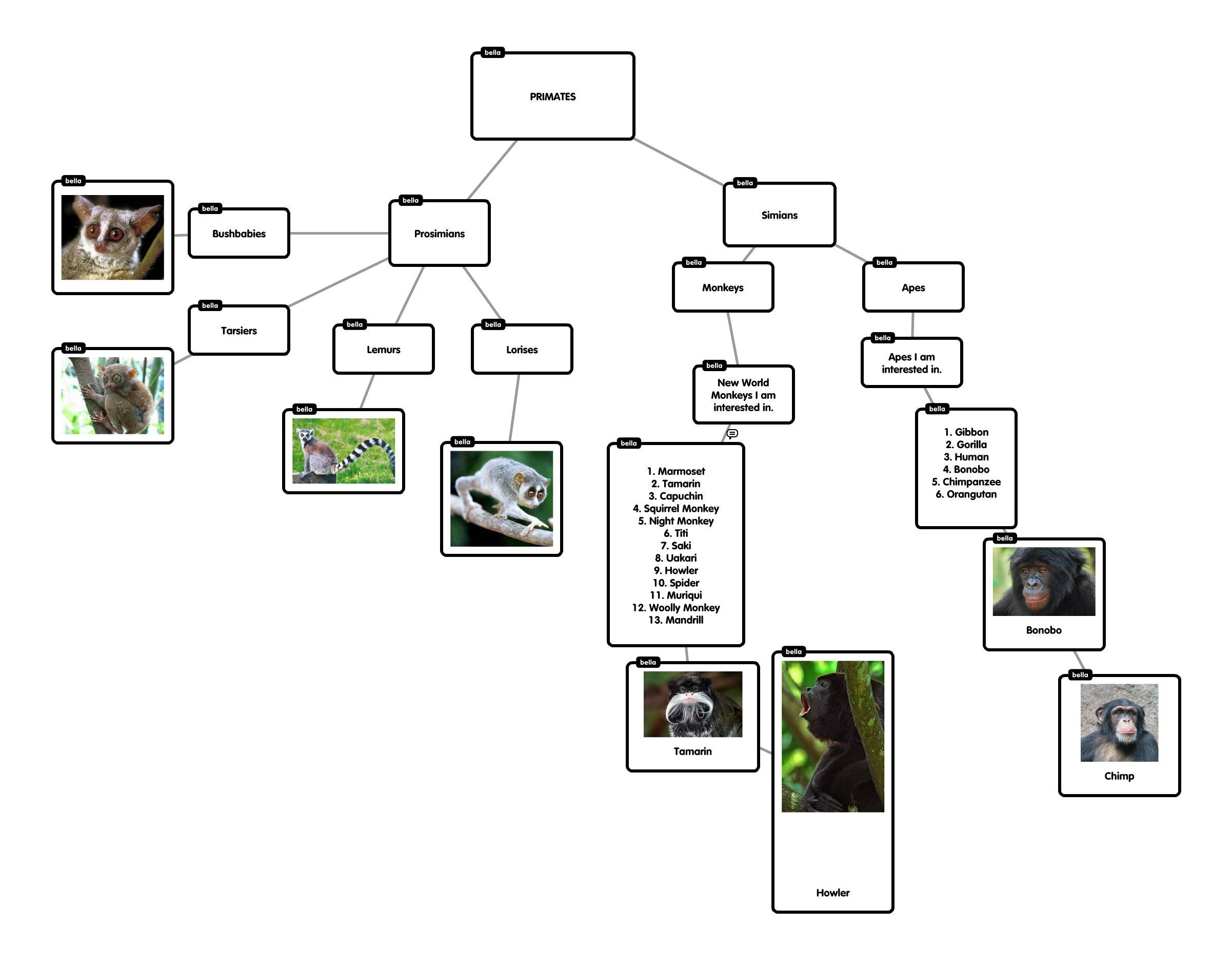 Primates Flow Chart Primates